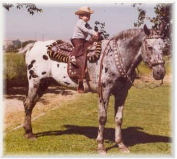 Chief of Fourmile, foundation appaloosa stallion