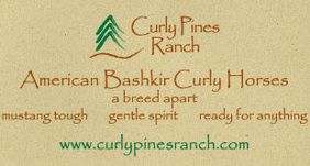 Quality curly horses for sale by Curly Pines Ranch