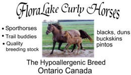Quality Curly Horse Breeder, FloraLake Curly Horses, Ontario Canada